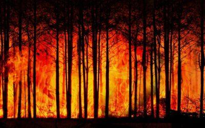 Τα δέντρα πεθαίνουν όρθια